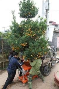 xe-nang-cay-canh-xe-nang-mat-ban-300kg